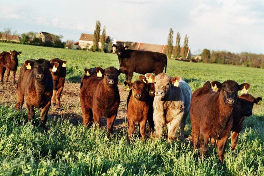 BOA Farm